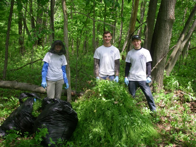 The stewardship crew pulled lots of garlic mustard in 2014. Help us make 2015 even more successful!
