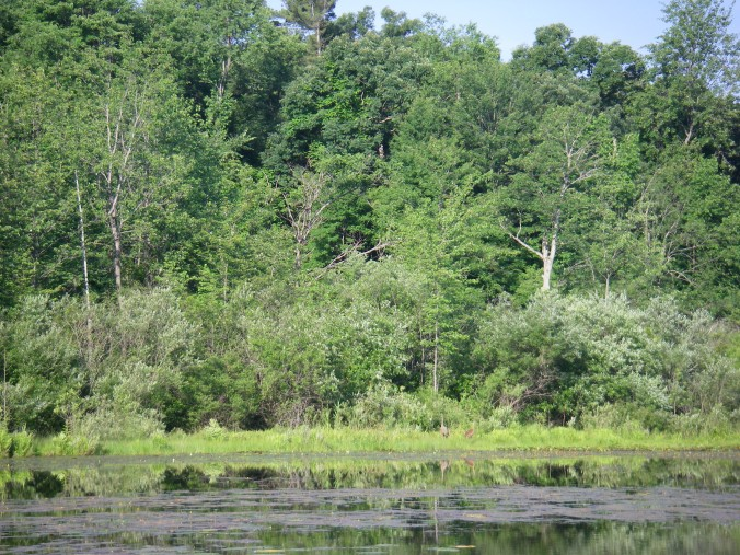 If you look closely, you'll see the sandhill cranes in this picture.