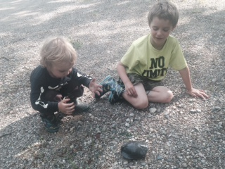 Curiosity and excitement describes the Fox children as they watch this turtle make its way through the park.