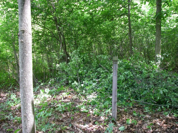 This sign post was hidden in the buckthorn next to the dock. We were surprised to find it hiding in there!