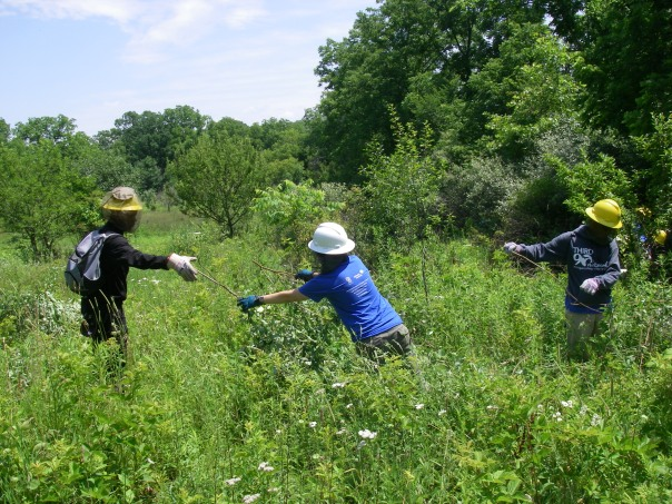 The crew also cleared some brush handing over a trail. Here they work as a team to move that brush.