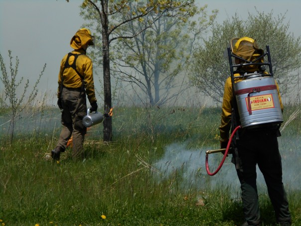The ignition crew communicate closely with the holding crew to make sure the fire does not burn in areas outside the burn unit.