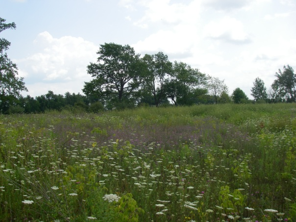 "The current plant community in the old field at Draper Twin Lake Park consists mostly of non-native species and ""weedy"" native species."