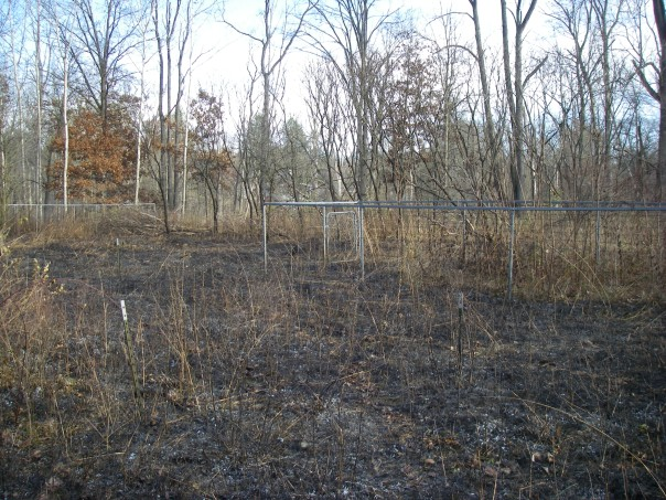 The Nicholson Prairie south of Silverbell, with the short deer exclosures, also burned well.