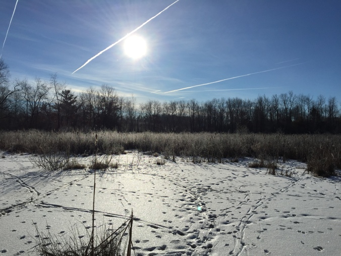 Animal tracks mark the snow and vapor trails from jets cross the sun. People and animals still need to get places when it is cold!