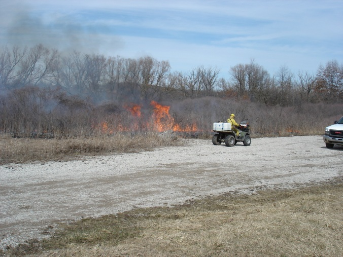 Botanical surveys found prairie plants in the upland areas at Gallagher Creek Park. Prescribed burning helps keep the shrubs from choking out these sun-loving plants.