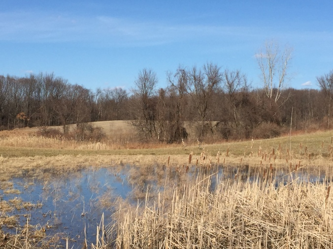 Do you see the sandhill cranes? Corner of Buell and Lake George, March 26, 2015.
