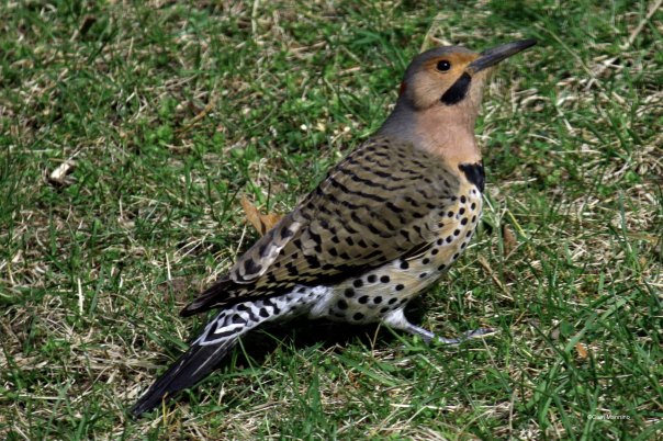 Flicker on ground