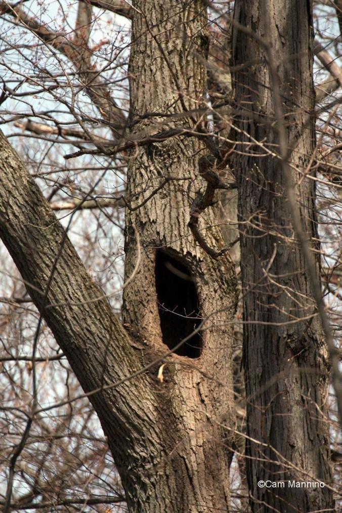 The racoon hole