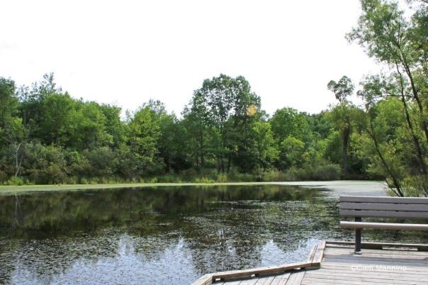 Center Pond