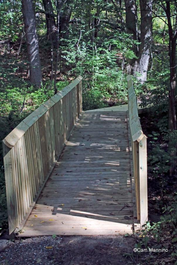 New bridge in Western Woods