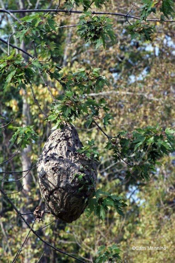 Hornet's nest Center Pond East