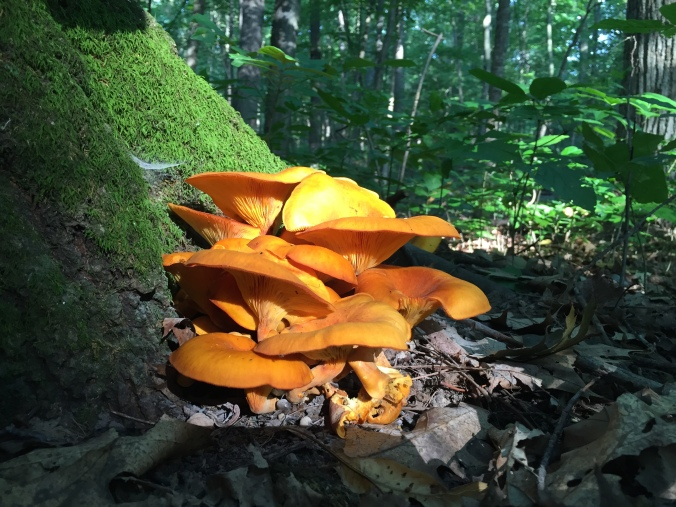 What kind of mushrooms are these? Attend the class to find out!