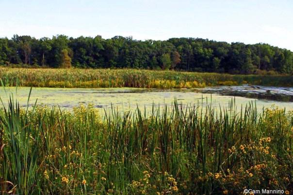 Marsh in Sept_edited-1