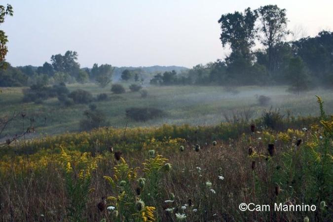 Morning mist western slope