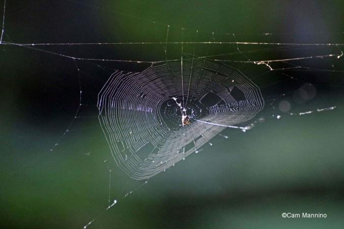 Orb spider web pond near Gunn