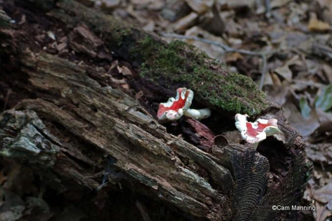 red mushrooms?