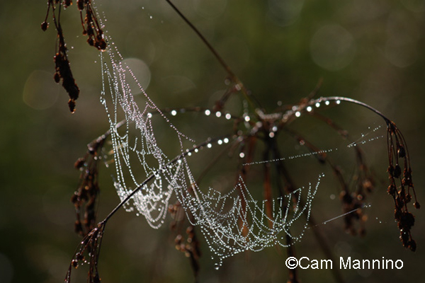 web jewelry fb