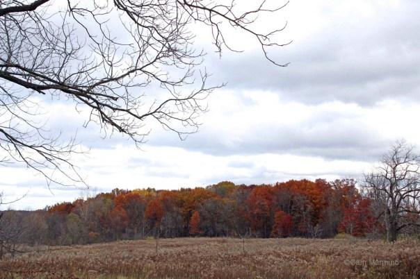 Russet trees across Eastern meadow