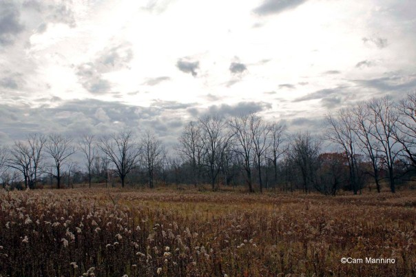 Eastern field and walnut lane late fall