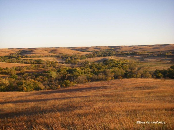 Golden Kansas Prairie
