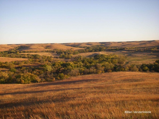 Golden Kansas Prairie