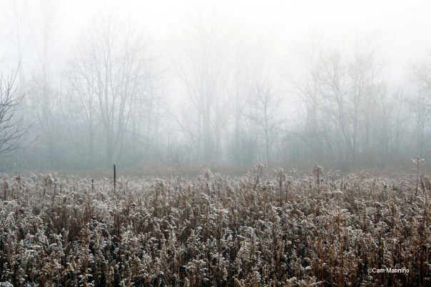 Goldenrod December Mist