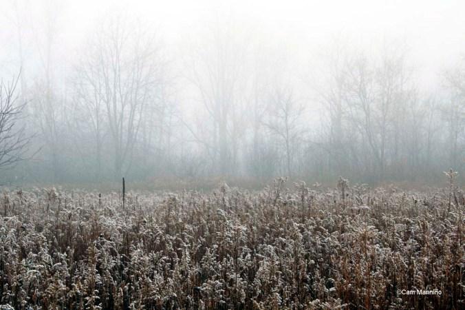 Goldenrod December Mist