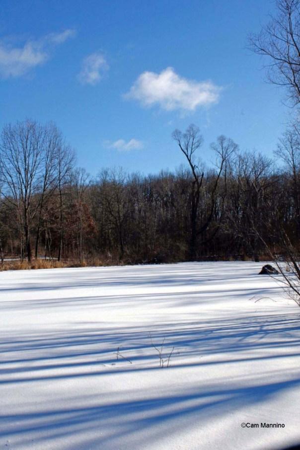 Blue morning shadows on center pond
