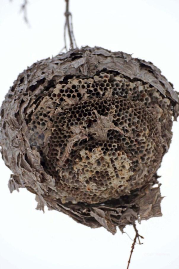 Closeup hornets nest over ice