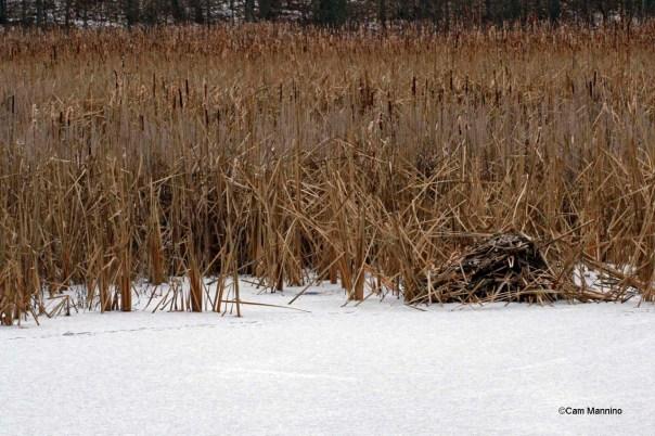 muskrat trail near push up marsh