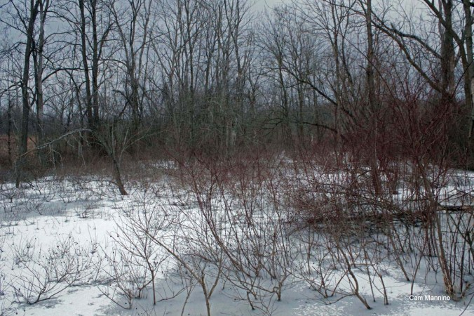 wetland below hill winter