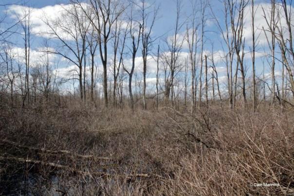 Lane Swamp