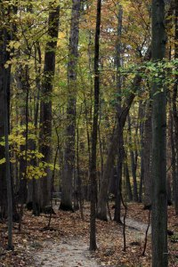 Path through Oak-Hickory forest