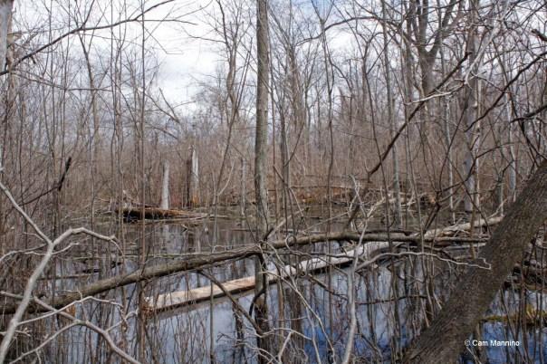 Pond near the house Mike's ducks