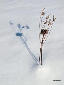 weed shadow