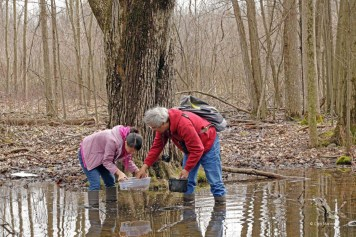 Volunteers Catherine Hu and Antonio Xeira monitor a vernal pool in the northern forest at Bear Creek Nature Park in 2016.