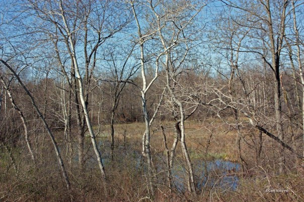Draper marsh from east