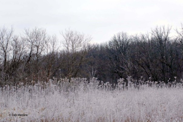 Frost in late March