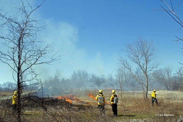 Prescribed burn at Beark Creek Nature Park, Spring 2016