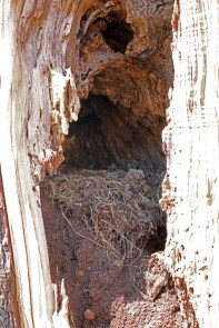 A closer look at the nest inside the tree.