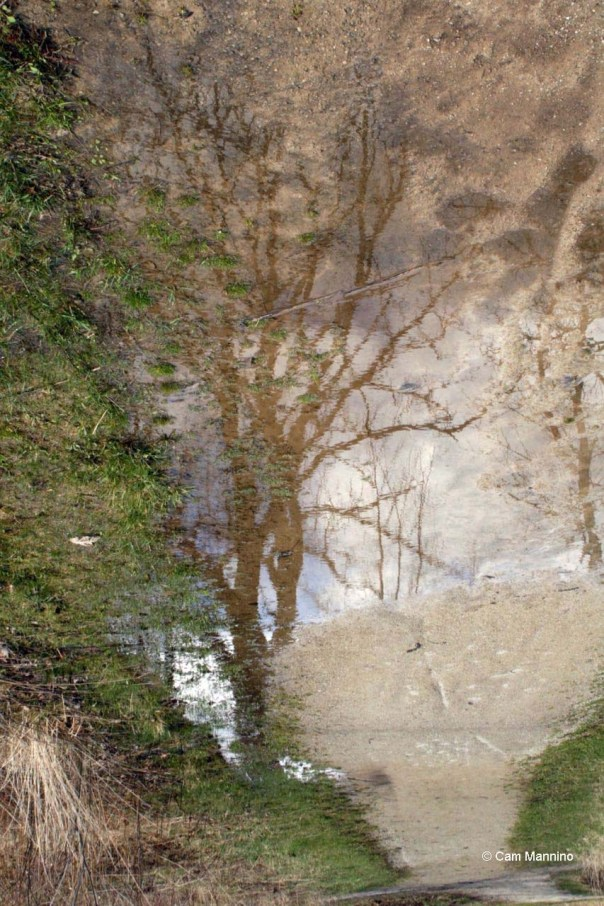 Tree in puddle