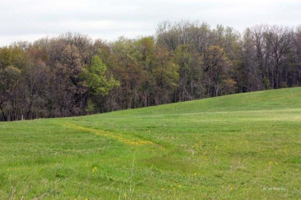 Old field Ilysley
