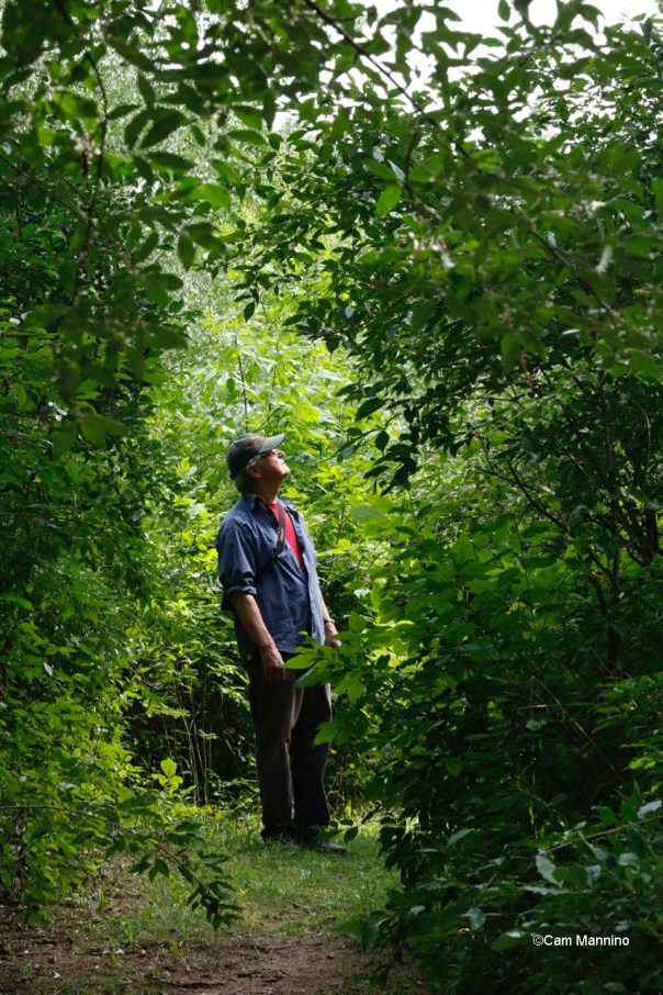 My husband in the dense invasive shrubbery at Stony Creek Ravine