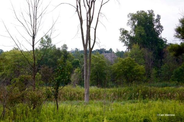 Emergent Marsh GC (1)