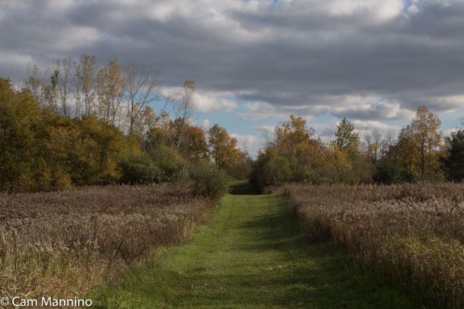 Field at Cranberry Late Oct