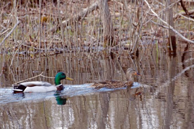 mallards-playground-pond
