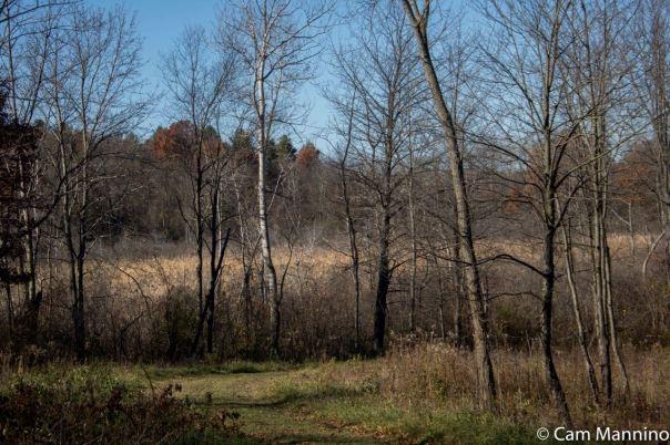 Central Marsh Draper