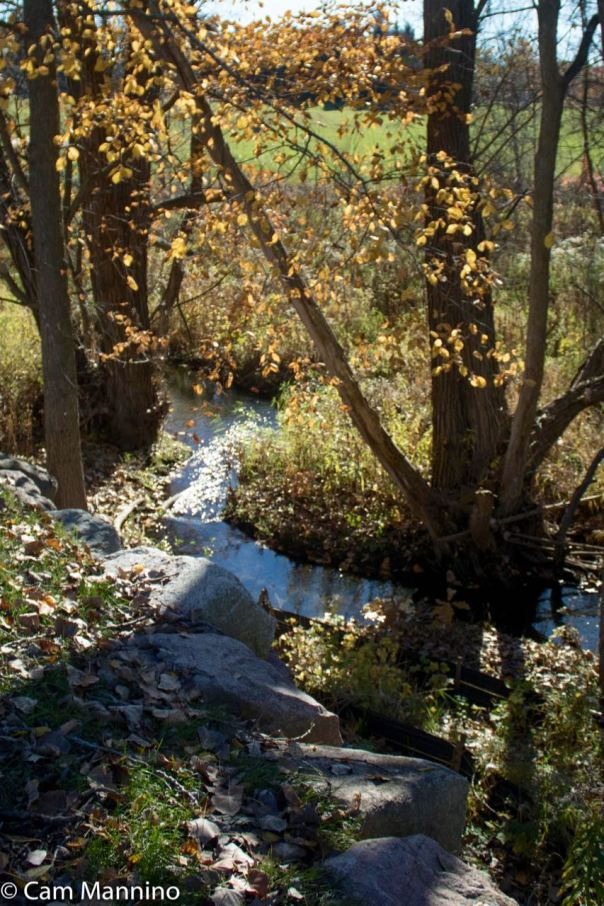 Gallager Creek at the Pinnacles