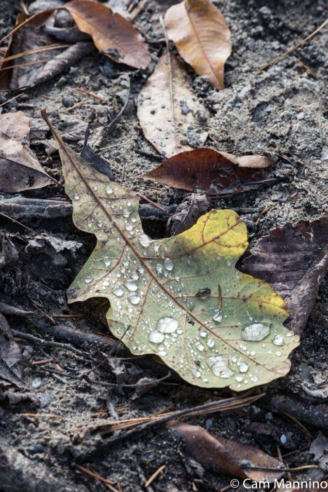Leaf with raindrops Draper